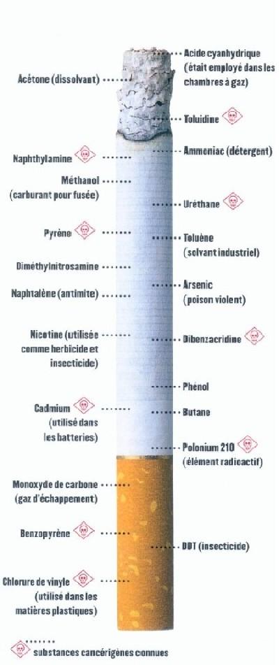 Anatomie cigarette